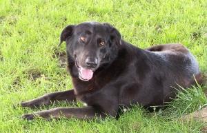 Our family hound dog, Sawyer.