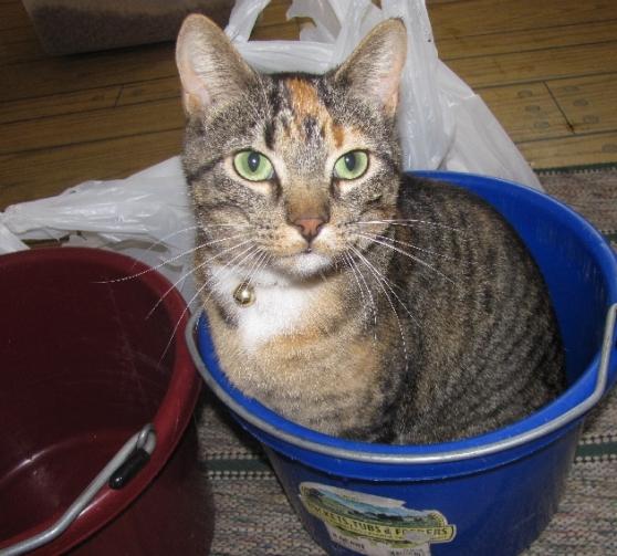 cat in the bucket